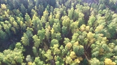 Green trees top view Stock Footage