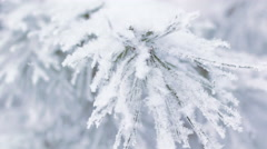 Pine branches covered with hoar frost, 4K realtime video Stock Footage