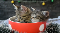One awake and one sleepy kitten in a cup Stock Footage