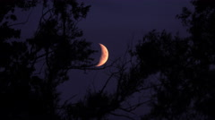 Crescent moon and dark night sky with silhouette of trees. Stock Footage