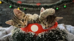 Holidays with kittens Stock Footage