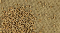 Falling grains of wheat on a rotating cloth burlap Stock Footage