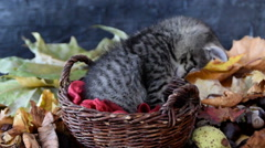 Sleepy kitty yawns Stock Footage