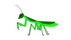 Mantis animation on white background Stock Footage
