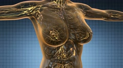 Loop science anatomy scan of woman limphatic system glowing with yellow Stock Footage