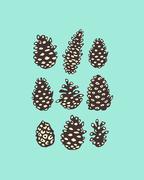 Pine cones illustration Stock Illustration