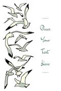 Sea gulls illustration Stock Illustration