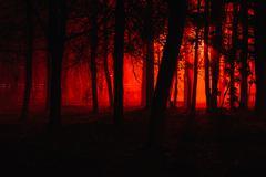 Scary foggy forest Stock Photos