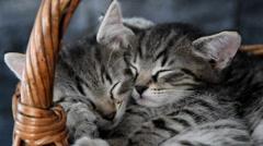 Two kittens sleeping in a wicker basket Stock Footage