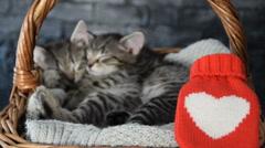 Two lovely kittens sleeping in a wicker basket Stock Footage