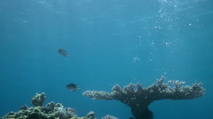 Underwater life with fish Stock Footage