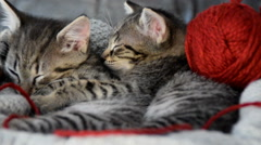 Cuddled kittens with a ball of wool Stock Footage