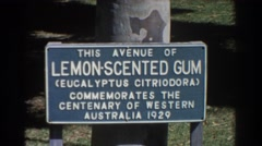 1967: this avenue of lemon-scented gum commemorating the centenary  Stock Footage
