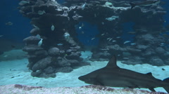 Underwater life of fish Stock Footage