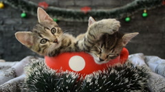 Kittens in a cup surrounded by holiday decoration Stock Footage