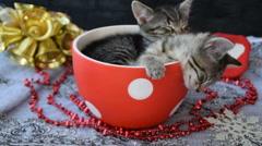 Sleepy kittens in the holiday atmosphere Stock Footage