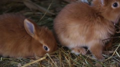 Little red rabbits eating at the cage Stock Footage