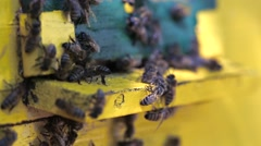 Bees flying in and out beehive close up view Stock Footage