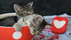 Lovely kittens sleeping in a cup Stock Footage
