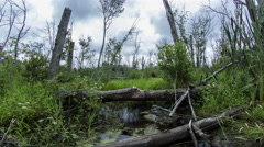 Gloucester Swamp with Clouds during Day Stock Footage