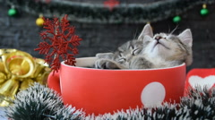 Kittens are sleeping in the large cup,among the New Year's decorations Stock Footage