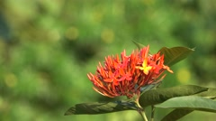 Red Flowers Bunch 4K Footage with Bokeh Effect Stock Footage