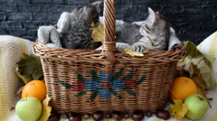 Two kittens playing with leaves in a wicker basket Stock Footage
