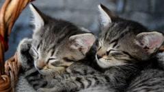 Two adorable kittens sleeping in a wicker basket Stock Footage
