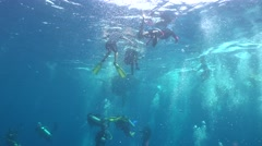 Whale shark from nowhere Stock Footage