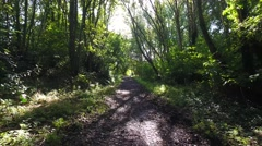 Low aerial shot backwards along a woodland path with sunglare. Stock Footage