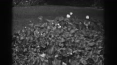 1938: ivy and flowers in the yard. VINELAND NEW JERSEY Stock Footage