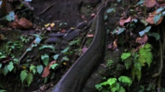 Ancient stone statue. Realistic Komodo dragon statue. Monkey forest near Ubud Stock Footage