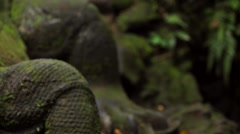 Ancient stone statue. Realistic Komodo dragon statue. Monkey forest near Ubud. Stock Footage
