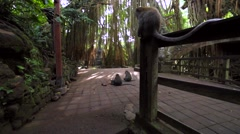 Famous dragon bridge in Monkey Forest . Monkeys, temple and stone statues. Stock Footage