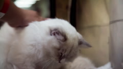 Lazy White Cat Don't Want To Play Stock Footage