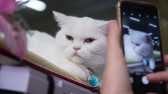 Making Photo of White Cat With Blue Pendant Stock Footage
