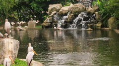 Painted stork Rest at Pond against Waterfall in Park Stock Footage