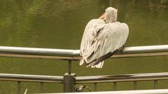 Closeup Pelican Sits on Metal Rail of Bridge over Water Stock Footage