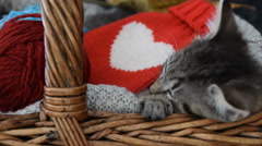 Gift for the person you love.Cute cat sleeping in a wicker basket Stock Footage