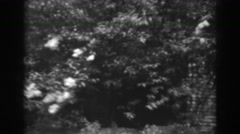 1938: viewing of trees in nature. WINCHESTER MARYLAND Stock Footage