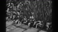1938: when nature desires to take over brick. WINCHESTER MARYLAND Stock Footage