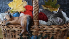 Wooden figure of cat and real cat in the wicker basket with leaves Stock Footage