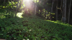Mexico Beautiful Jungle Forest Nature Trees 5K HD Stock Video Footage Stock Footage