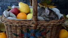 Adorable sleepy kitten in the basket with fruits Stock Footage