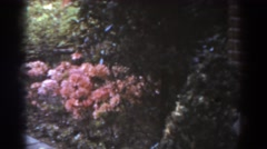 1938: blooming pink peonies along a paved garden path WEST VIRGINIA Stock Footage