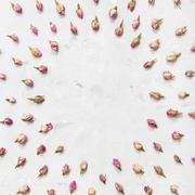 Round frame from pink rose flower buds on concrete Stock Photos
