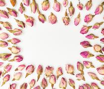 Frame from pink rose flower buds close up on whit Stock Photos
