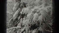 1938: snow covered pine tree limb. MARTINSBURG WEST VIRGINIA Stock Footage
