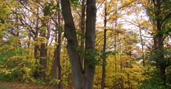 Epic vivid display of fall colors in autumn season Stock Footage