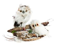 Two owls on a wooden base with snow, pine needles and snowflakes. Completely  Stock Photos